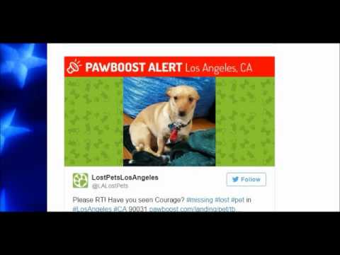 Animals Warnings For Earthquakes, Los Angeles Lost Pets